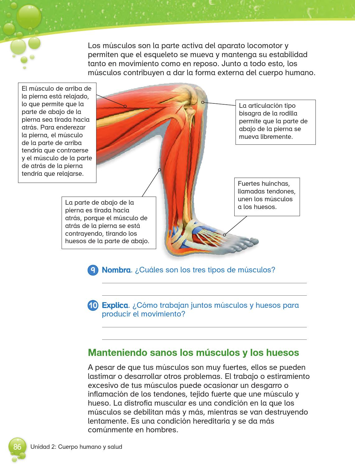 4 basicociencias by Marlen Correa - issuu