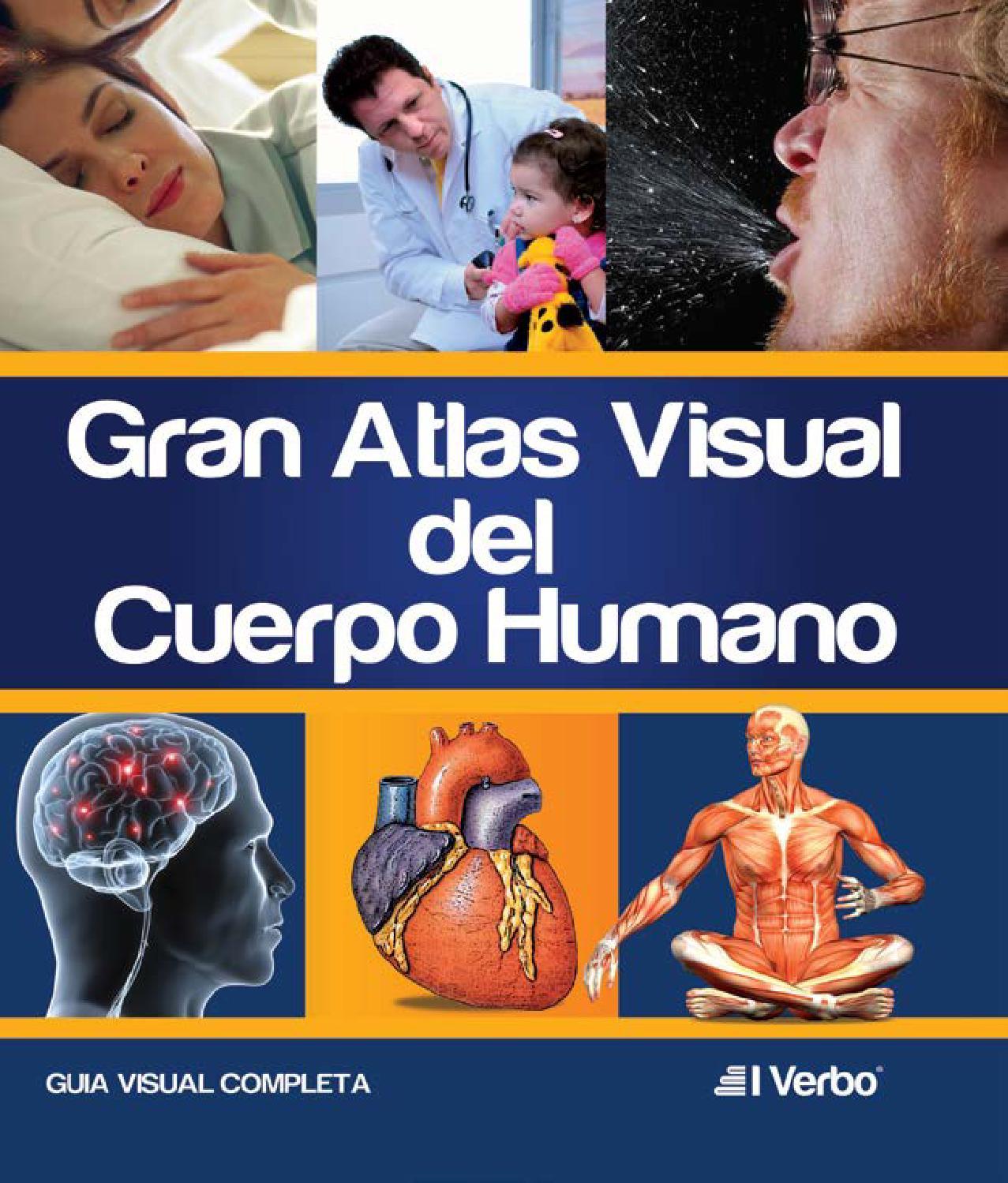 Gran atlas visual de anatomia humana by El Verbo editores - issuu