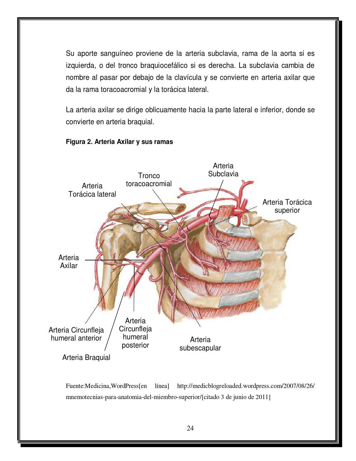 Tratamiento quirúrgico para las fracturas de miembro superior desde ...