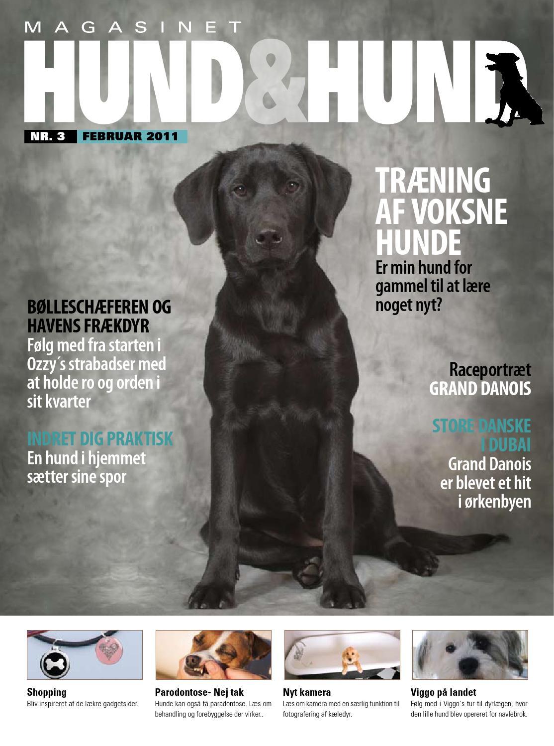 Picture of: Hund Hund Nr 3 By Hund Hund Issuu