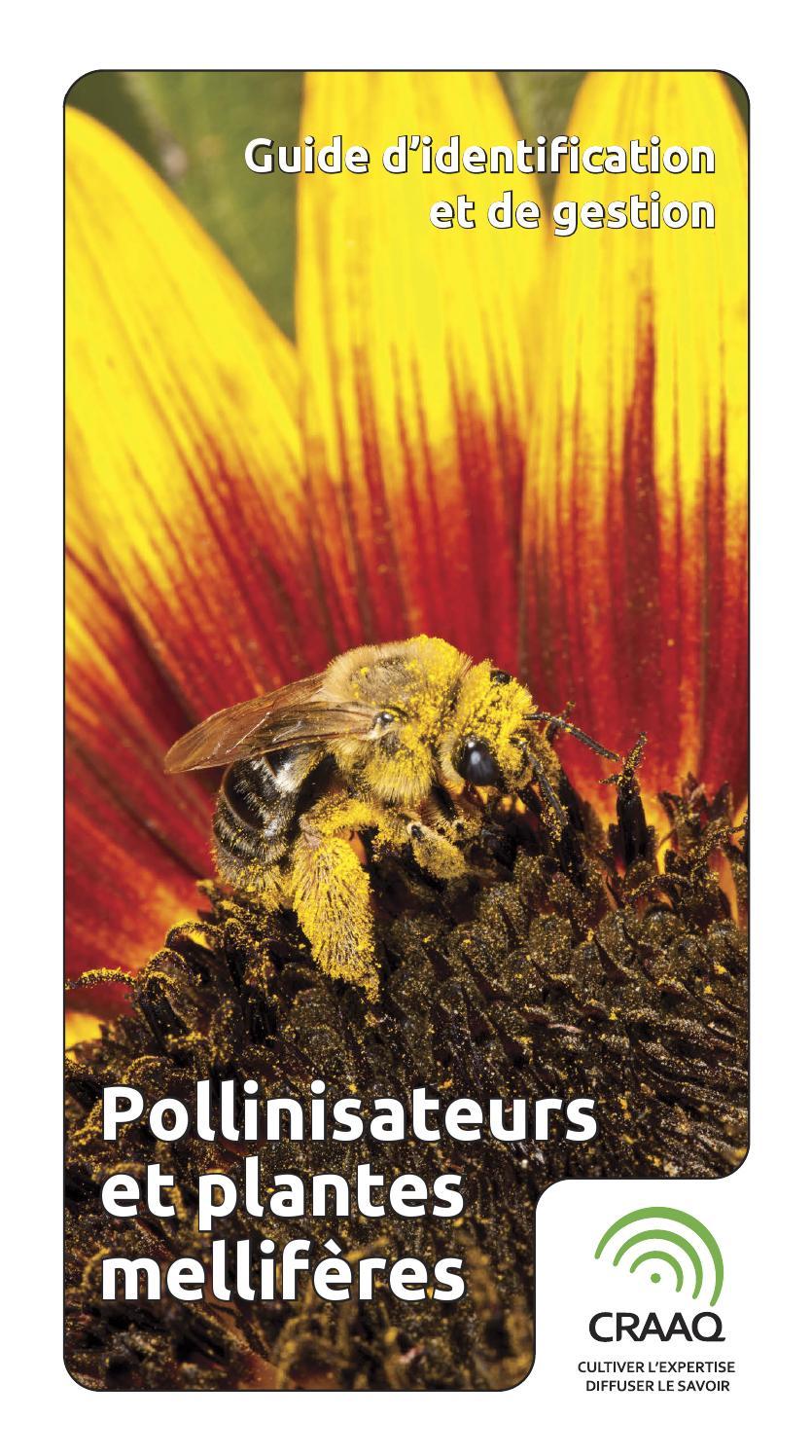 guide d 39 identification et de gestion pollinisateurs et plantes mellif res by craaq issuu. Black Bedroom Furniture Sets. Home Design Ideas