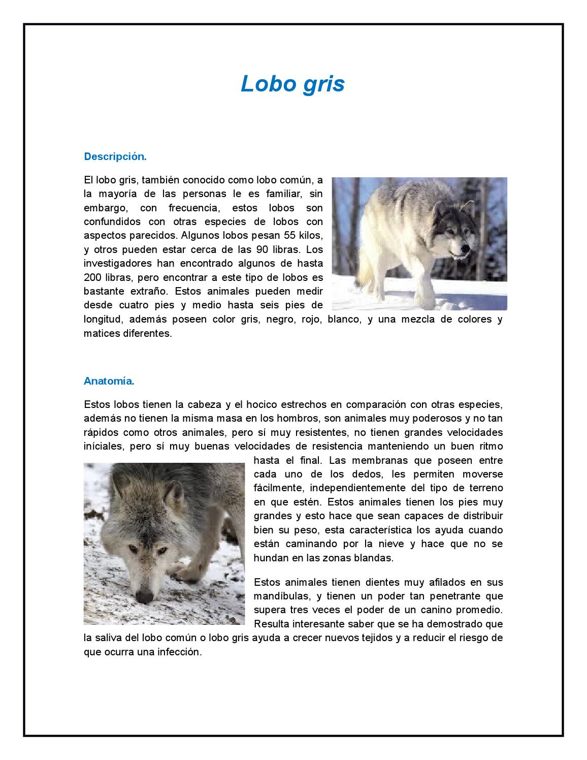 Lobo gris by Michelle Dumonth - issuu