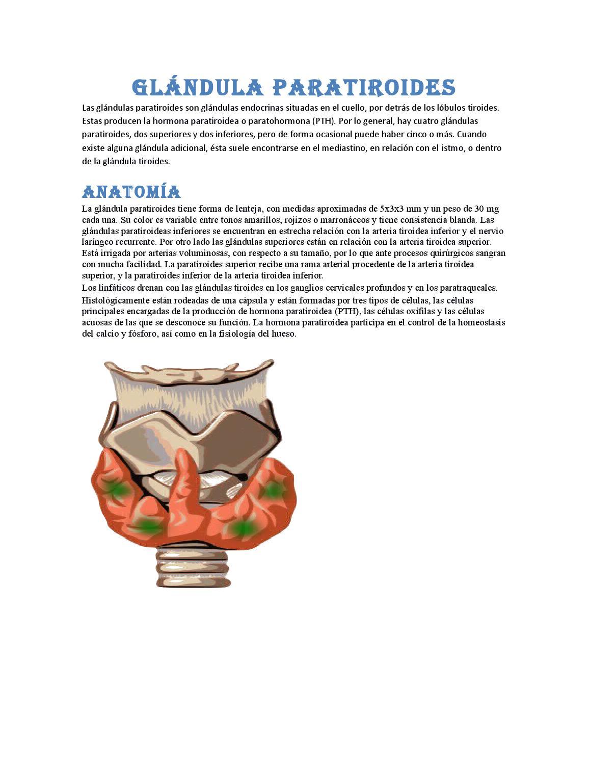 Glándula paratiroides by ronnyruiz - issuu