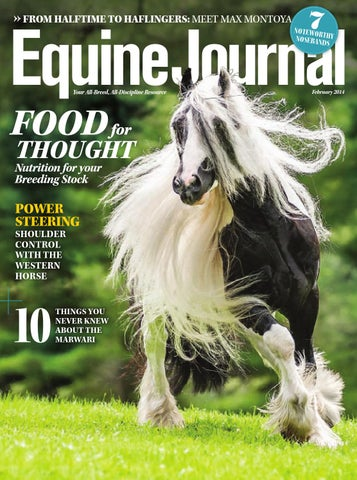 a046bb19d37 Equine Journal (February 2014) by Equine Journal - issuu