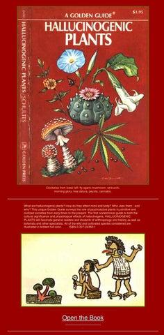 hallucinogenic plants a golden guide by giuseppe ciaramella issuu rh issuu com Midwest Tryptamine Plants Belladonna Plant