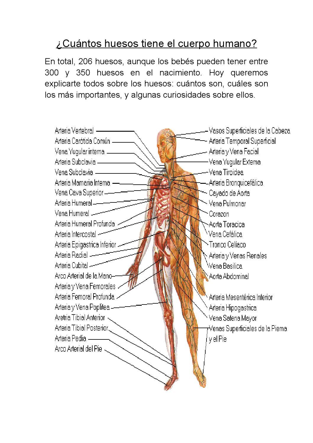 Cuántos huesos tiene el cuerpo humano mariano by catherine alexandra ...