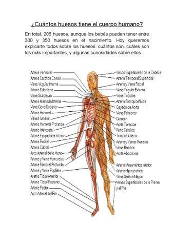 Cuántos Huesos Tiene El Cuerpo Humano Mariano By Catherine Alexandra