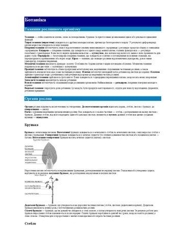 Ботаніка Тканини рослинного організму Тканини — стійкі комплекси клітин d7a914a9a53c8