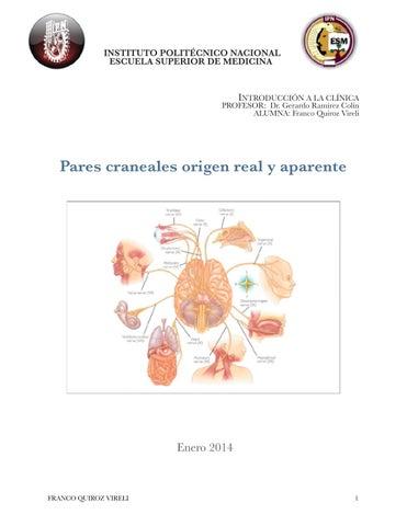 Pares craneales orígen real y aparente by Vireli Franco - issuu
