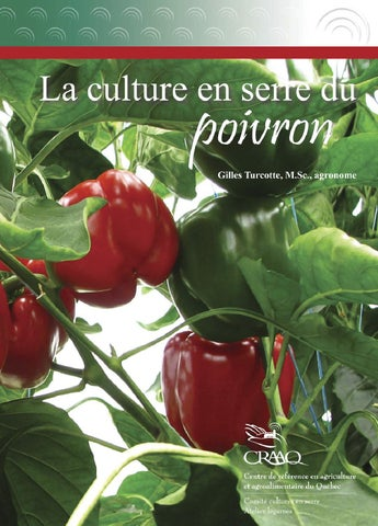 La culture en serre du poivron by craaq issuu - Culture du melon en serre ...