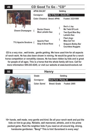 2014 Winnemucca Ranch Rope Performance Horse Sale By Michelle