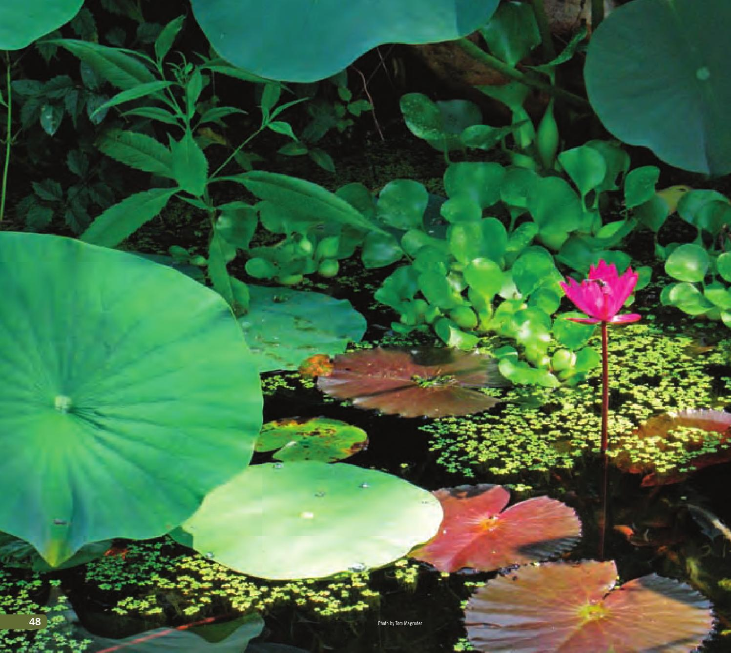 Chapter 3 - The abc's of aquatic plants