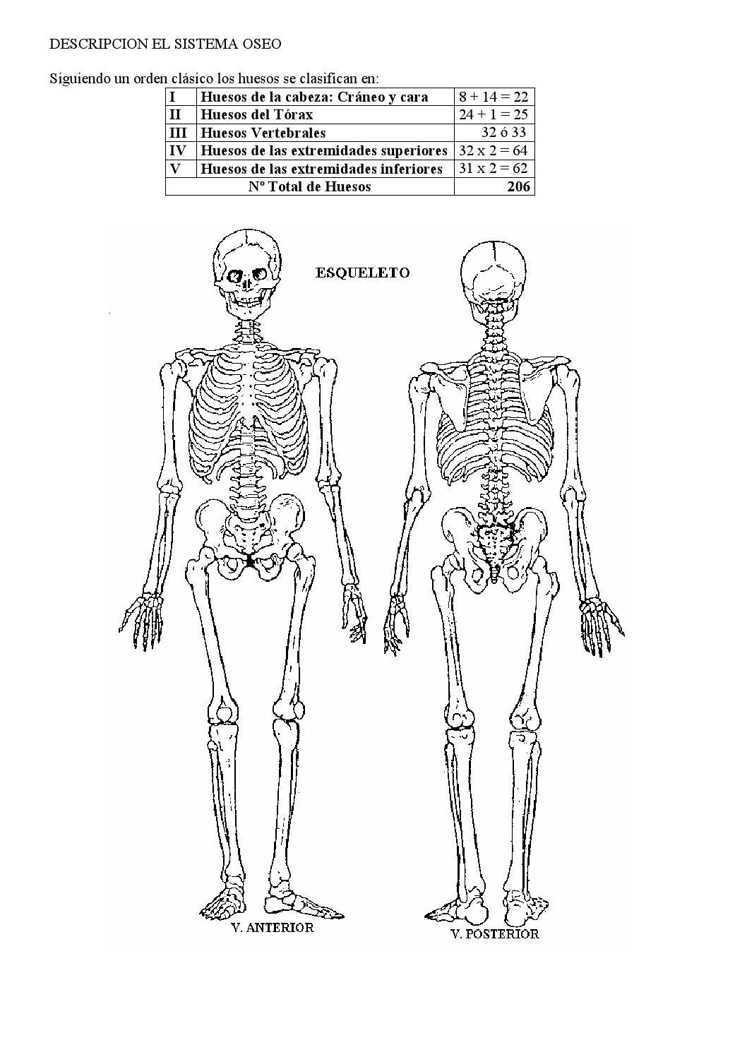 huesos de las extremidades superiores