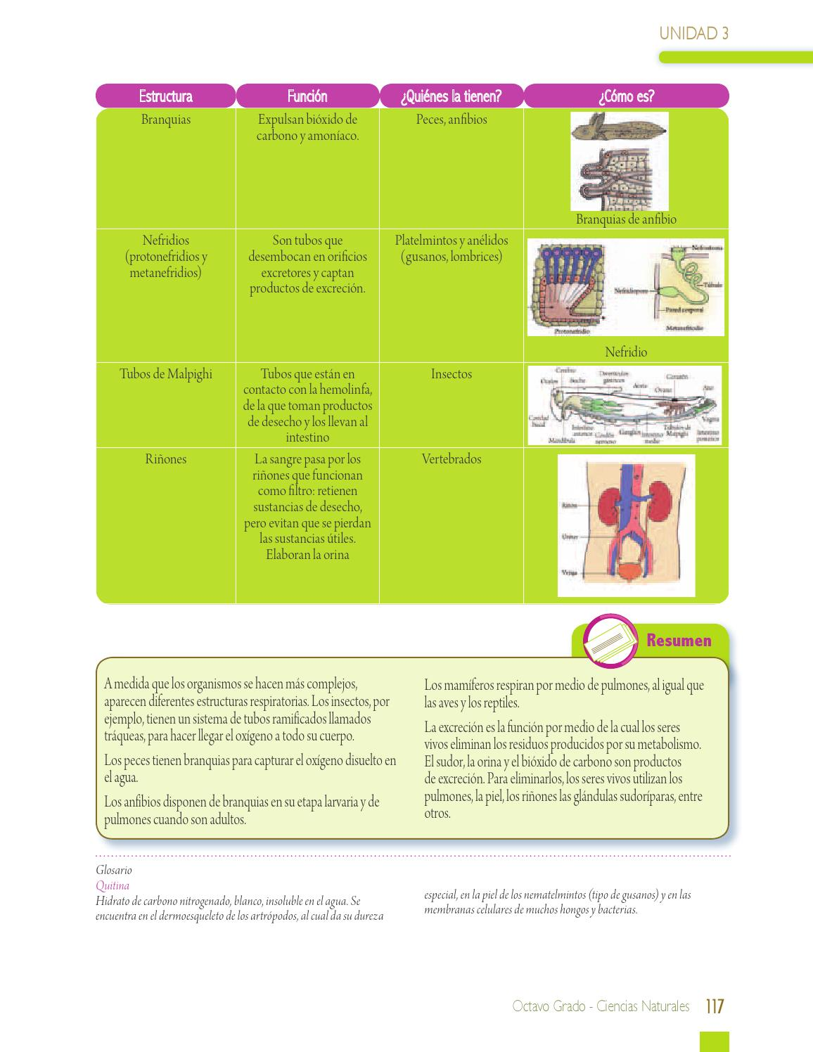 Ciencias Naturales 8 By Paginas Web Gratis Issuu