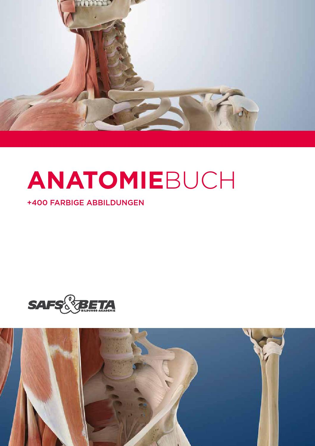 Fein Längster Muskel In Körper Ideen - Anatomie Ideen - finotti.info