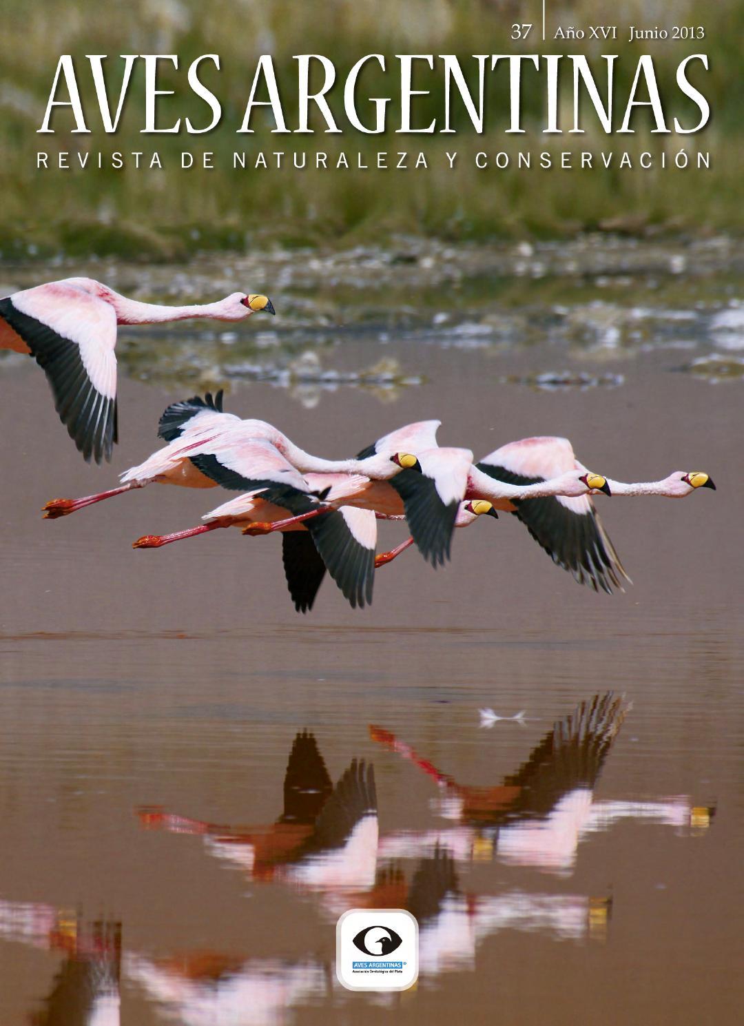 962839dbec0fb Revista Aves Argentinas   Naturaleza y Conservación 37 by Aves Argentinas -  issuu
