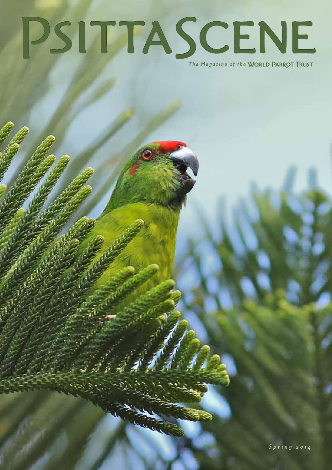 PsittaScene Spring 2014 by World Parrot Trust - issuu