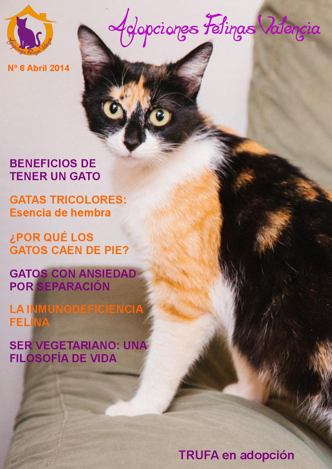 Adopciones Felinas Valencia, nº6 Abril 2014 by Adopciones Felinas ...
