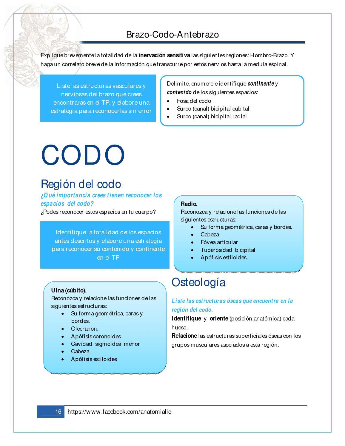 3. Brazo + Codo + Antebrazo - CECiM by Liborio Escobedo - issuu