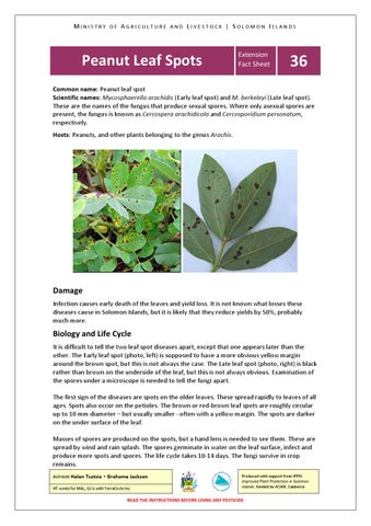 Extension fact sheets by terracircle issuu page 86 m i n i s t r y o f a g r i c u l t u r e a n d l i v e s t o c k s o l o m o n i s l a n d s peanut leaf spots thecheapjerseys Choice Image