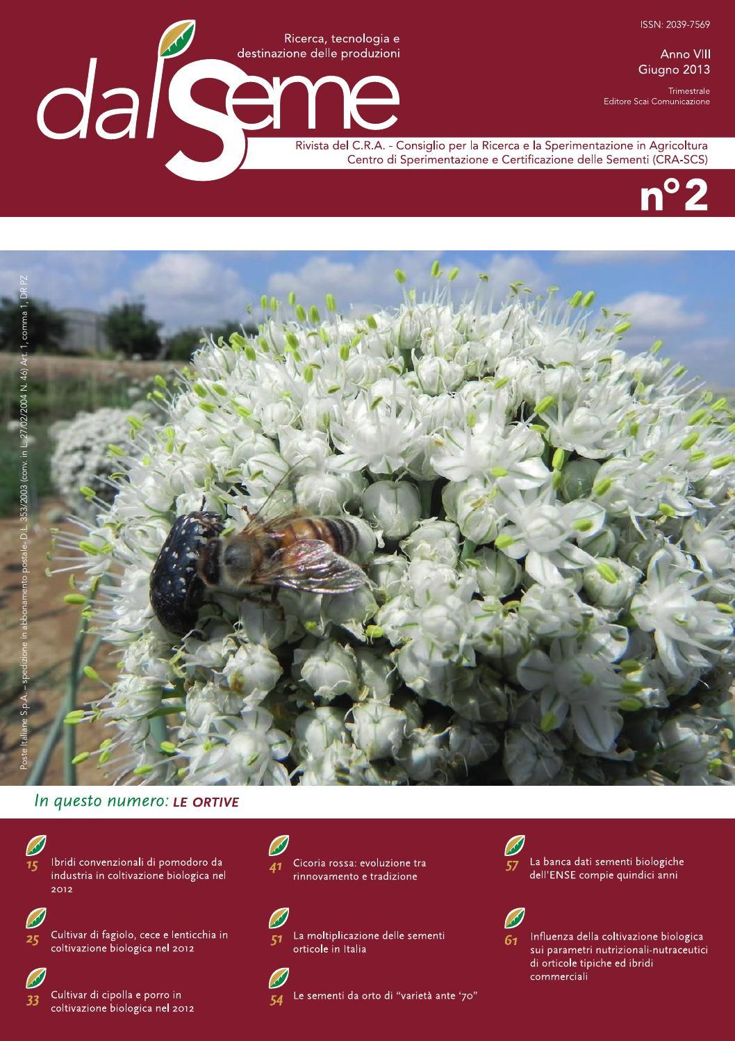 1000 SEMI-DI CICORIA variegata di lusia 1,5 GRAMMI