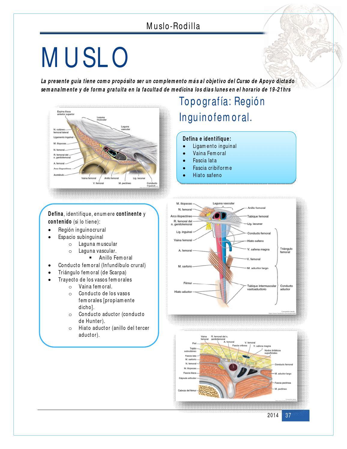 6. Muslo + Rodilla - CECiM by Liborio Escobedo - issuu