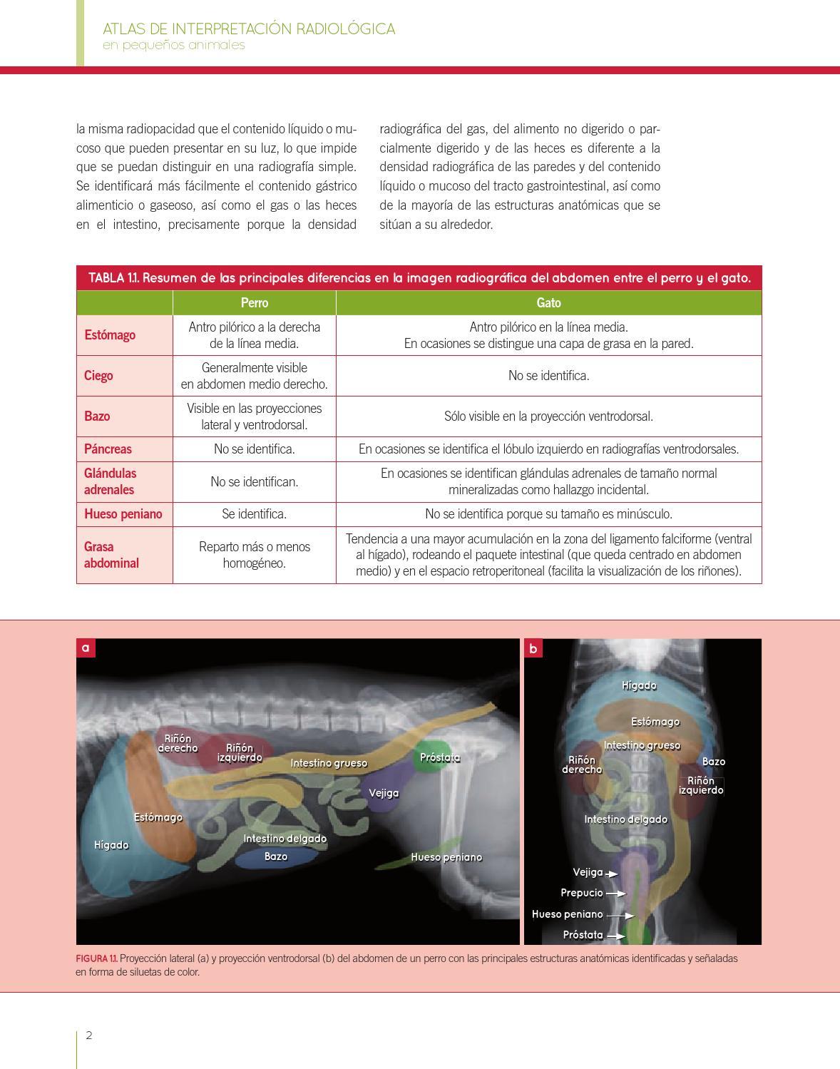 Atlas de interpretación radiológica en pequeños animales by Grupo ...