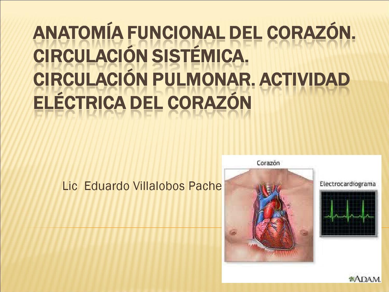 anatomía funcional del corazón by melli91 - issuu
