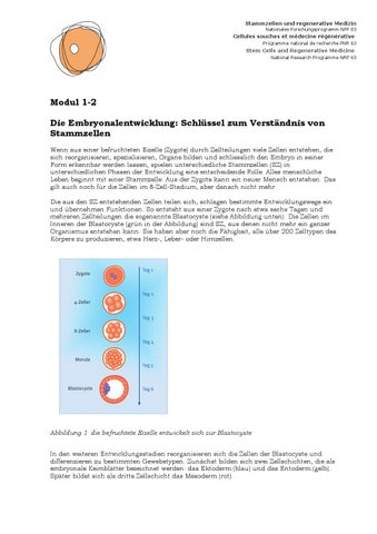 NFP 63 Embryonalentwicklung by SNSF - issuu