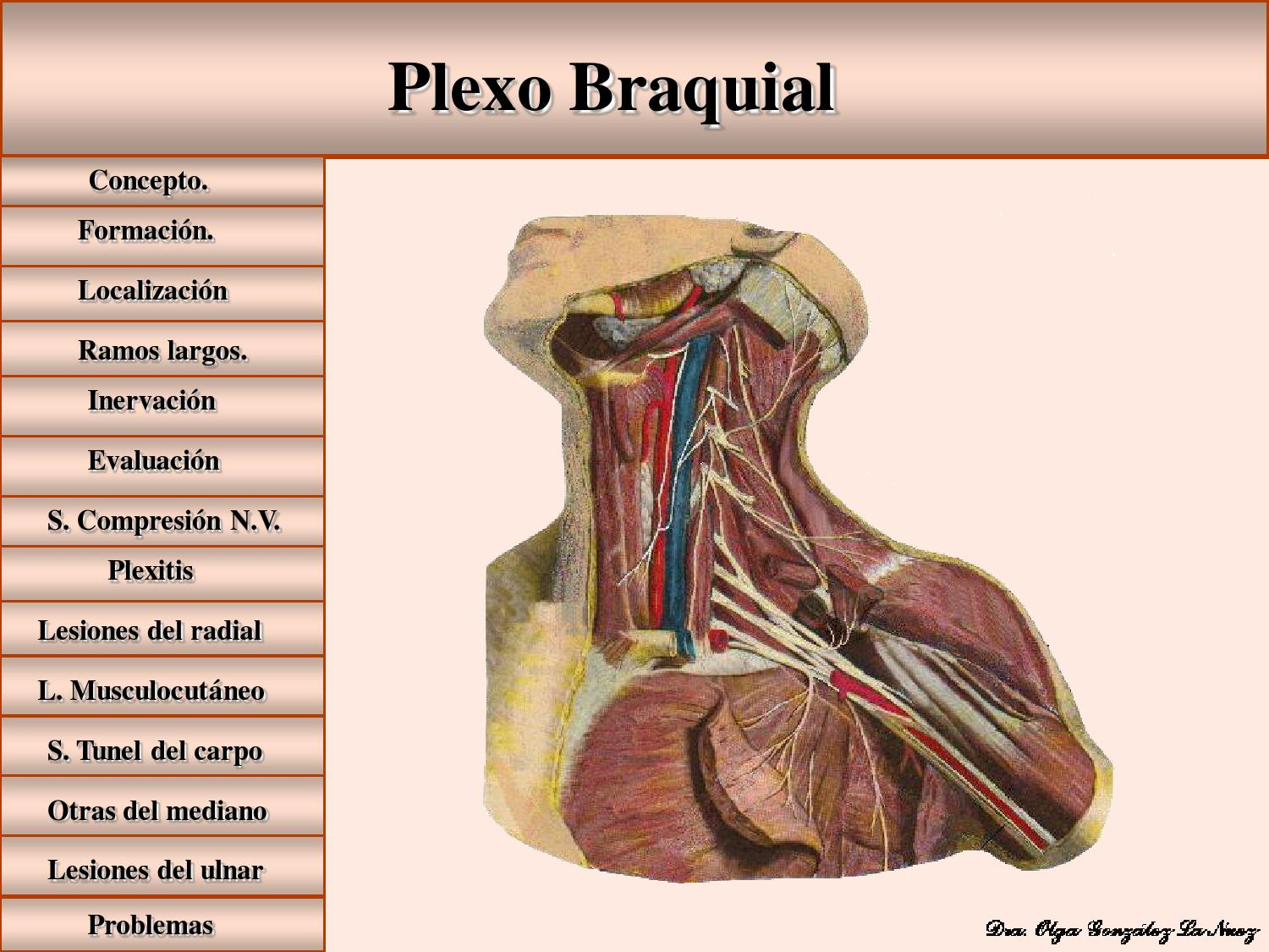 Plexo braquial by Diana - issuu