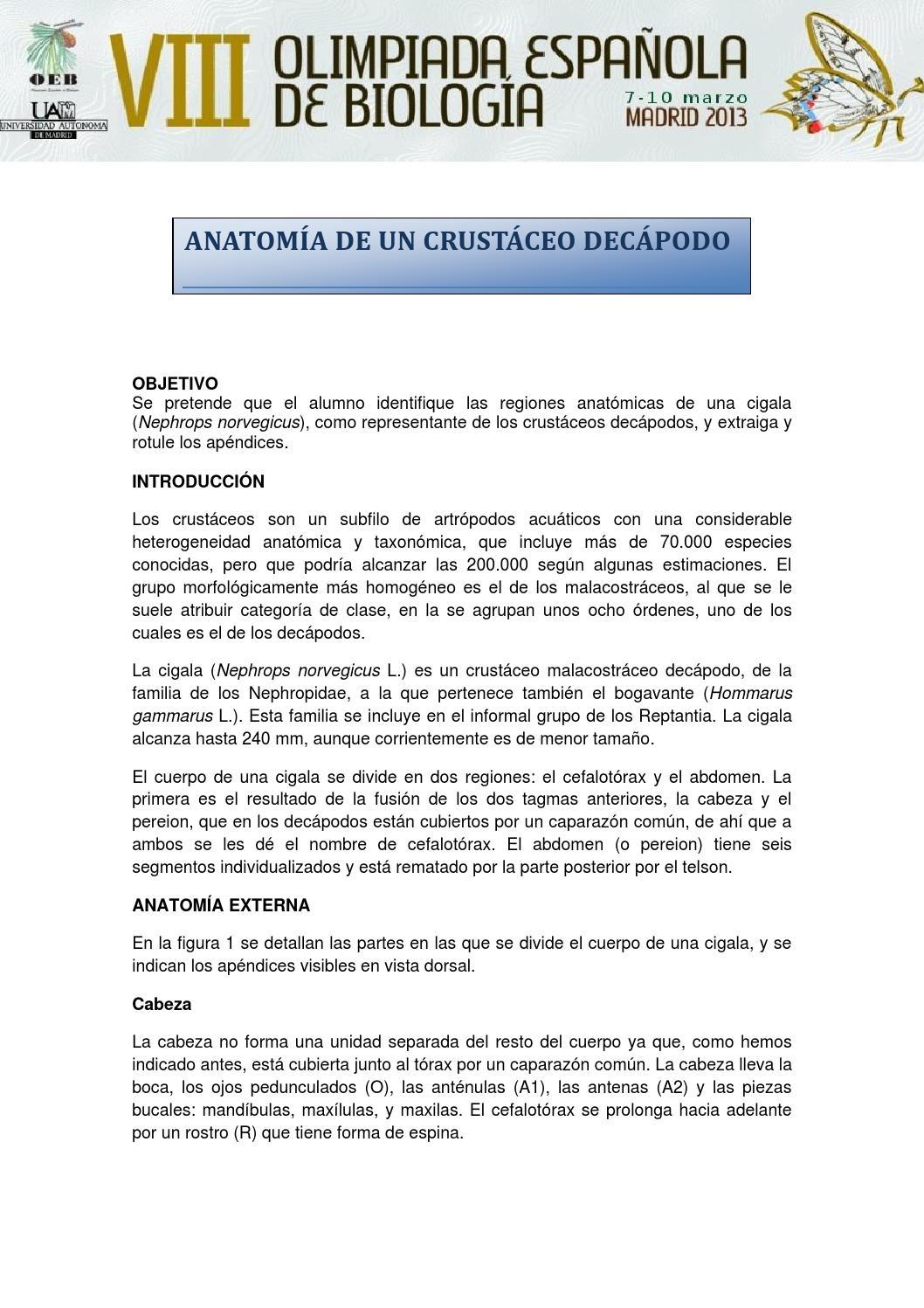 practica de zoologia la anatomia de un crustaceo decapodo guion de ...