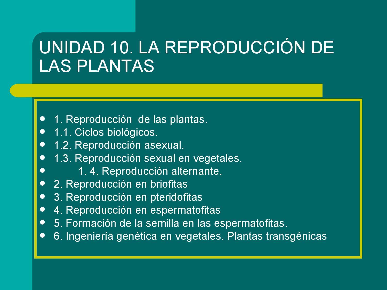 Equisetum reproduccion asexual de las plantas