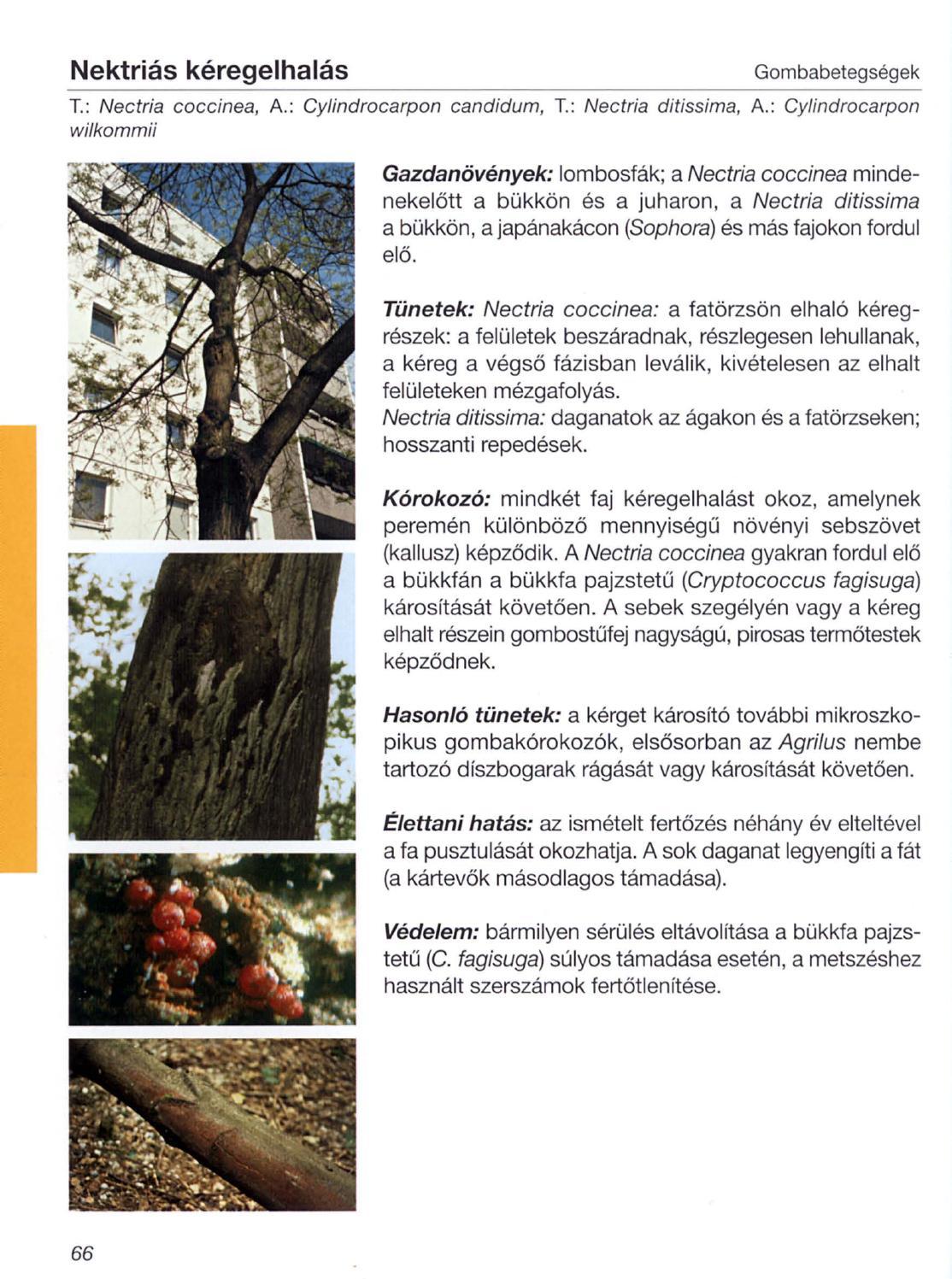 sampinyonparazita vagy szaprofita