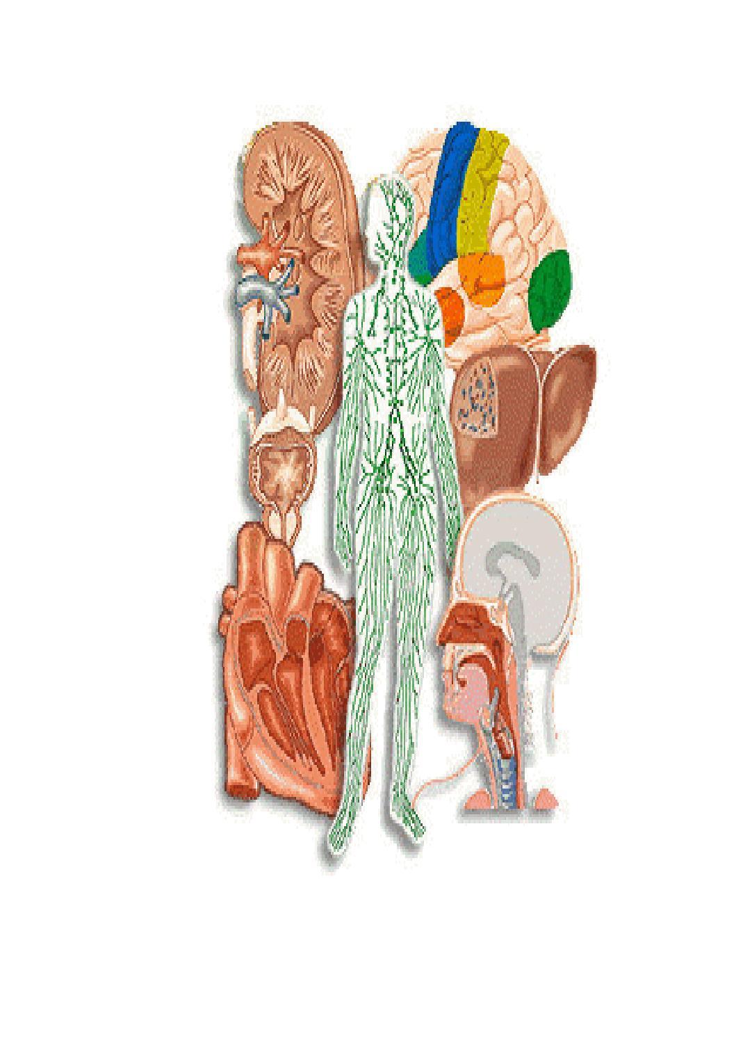 Sistema osteomuscular by david ferrer - issuu