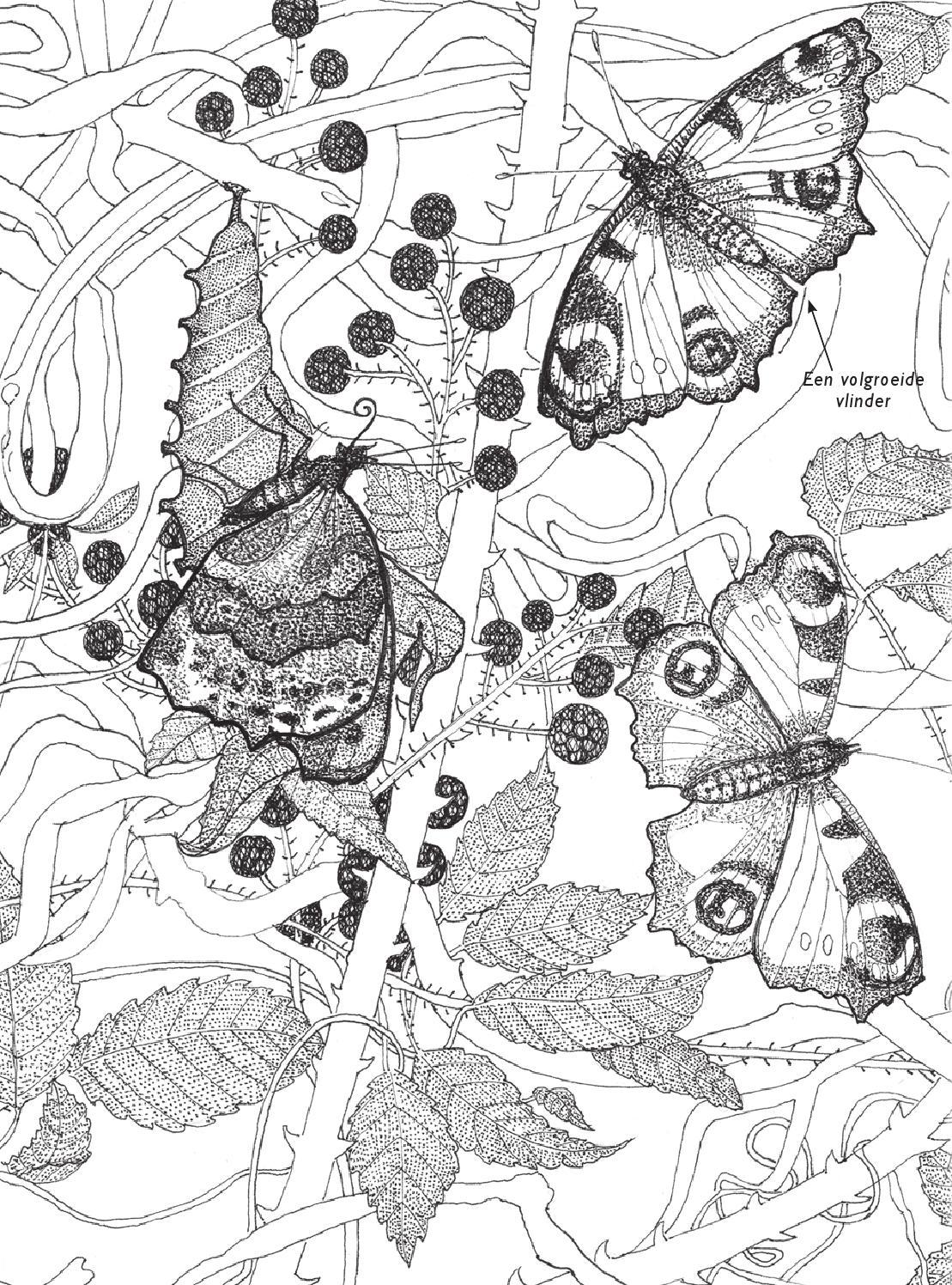 inkijkexemplaar kleurboek voor volwassenen vlinders by
