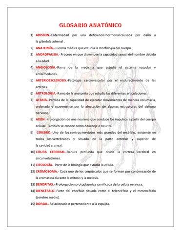 Diccionario anatómico by Jacqueline Domínguez - issuu
