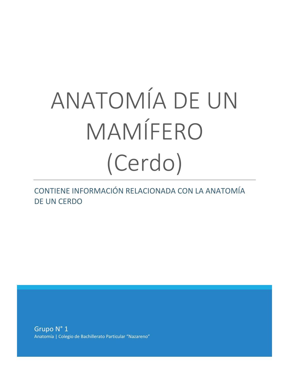Anatomía de un mamífero by k.l.adriano999 - issuu