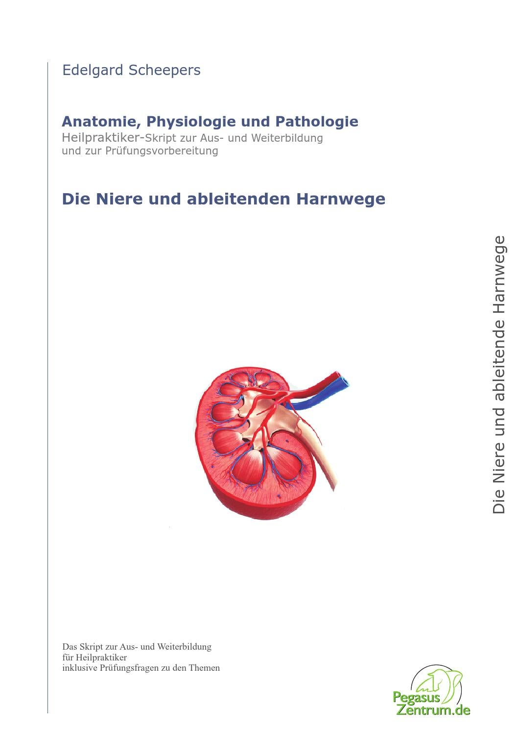 Beste Die Harnwege Anatomie Und Physiologie Galerie - Physiologie ...