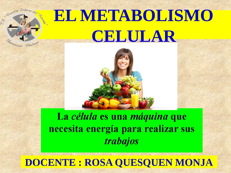 El metabolismo by Rosa Quesquen - Issuu