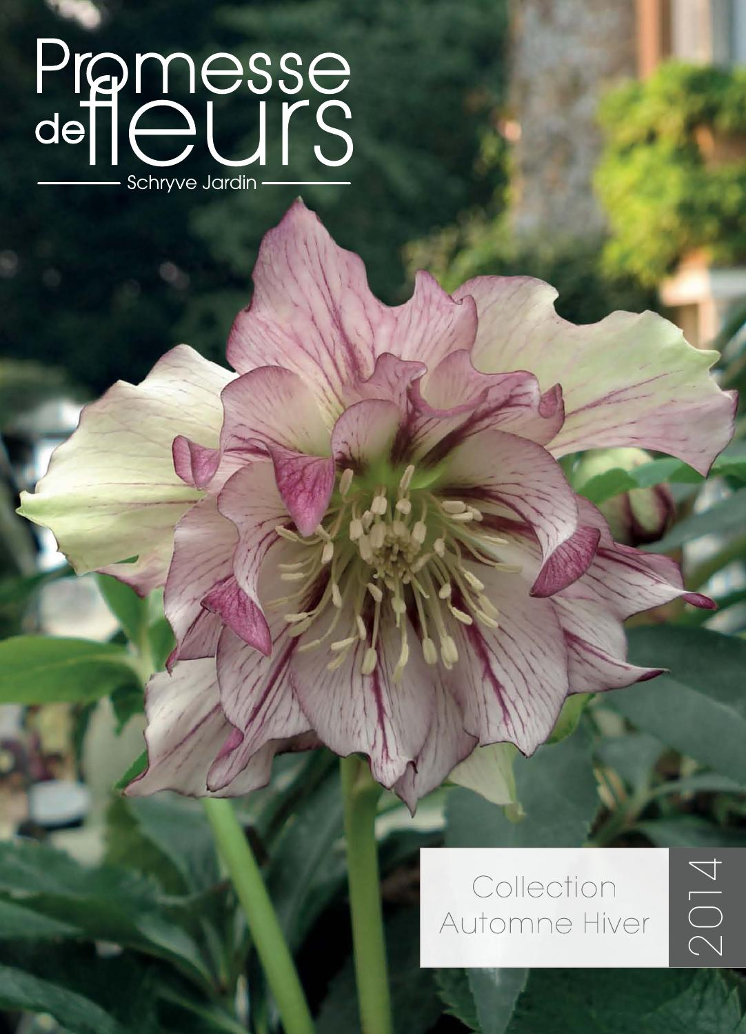 250 graines Fleur-Digitalis Mertonensis