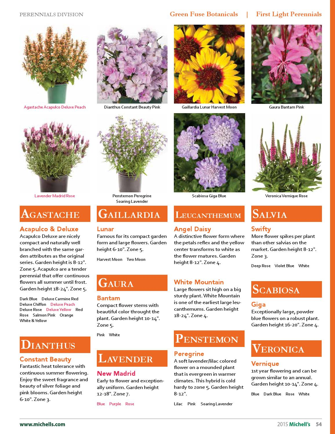 Perennial Flowers For Zone 7 Flowers Healthy