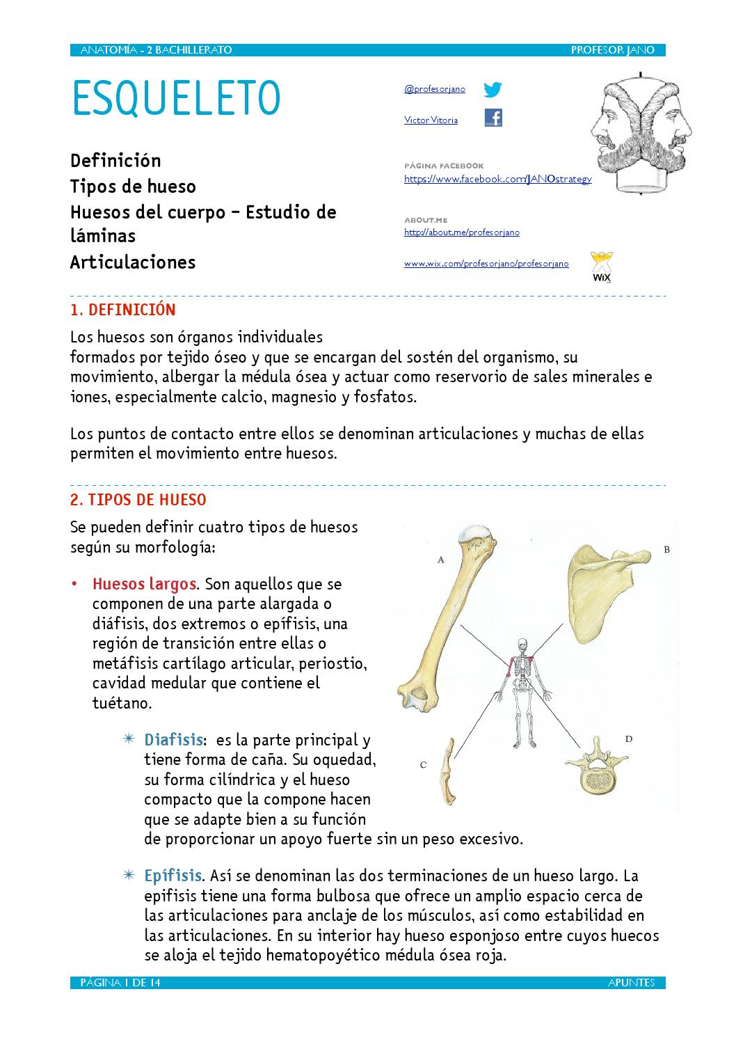 Apuntes esqueleto by VÍCTOR M. VITORIA - issuu