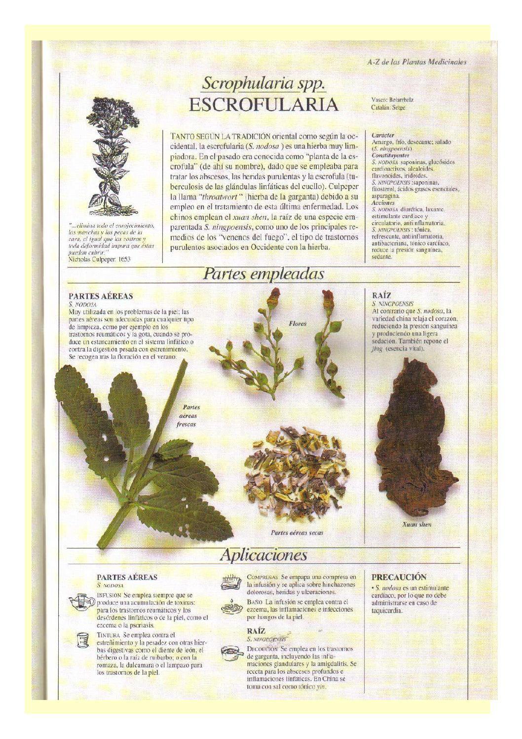 Medicamentos herbales cardioactivos para la hipertensión