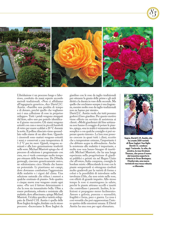 Rose Da Taglio Rifiorenti mestieri d'arte & design n°8 by fondazione cologni dei