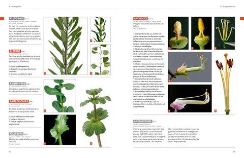 Extrait Dictionnaire Visuel De Botanique 201 Ditions Ulmer