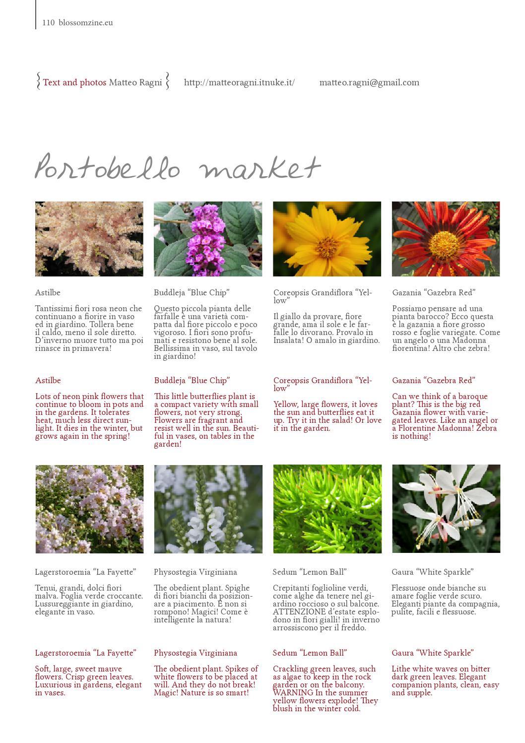 Fiori Da Giardino Roccioso n6 autumn 2014 blossom zine by blossom zine rivista di fiori