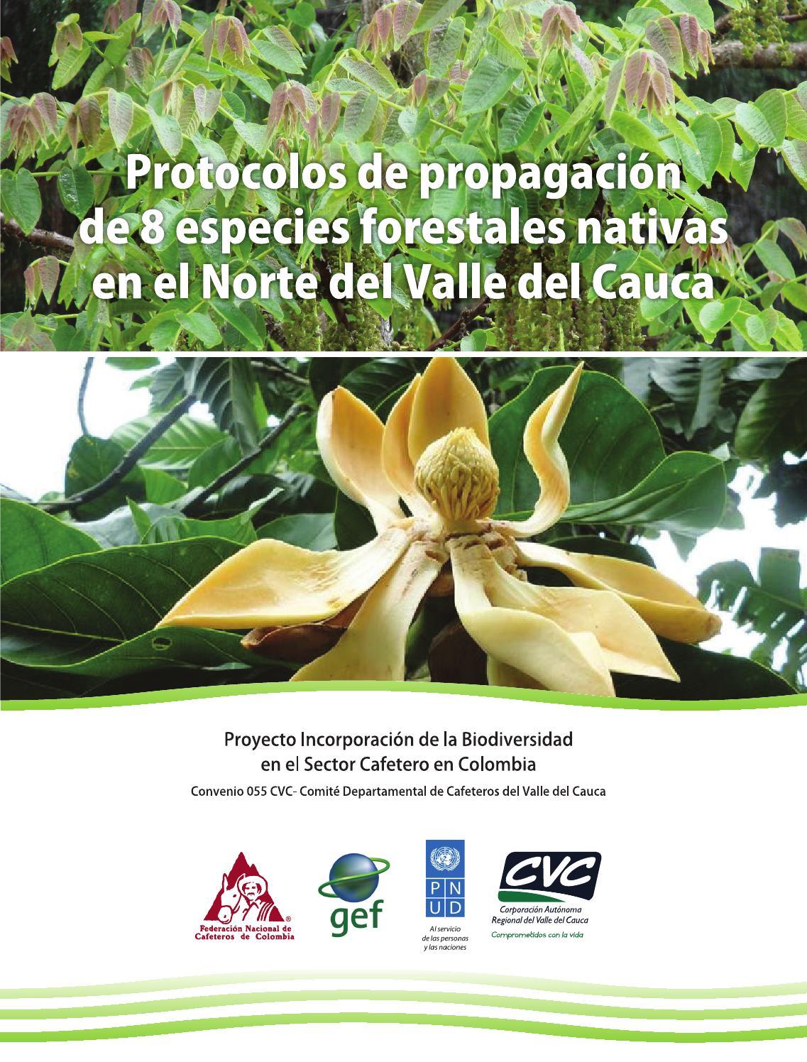 Protocolos de propagaci n de 8 especies forestales nativas for Viveros forestales en colombia