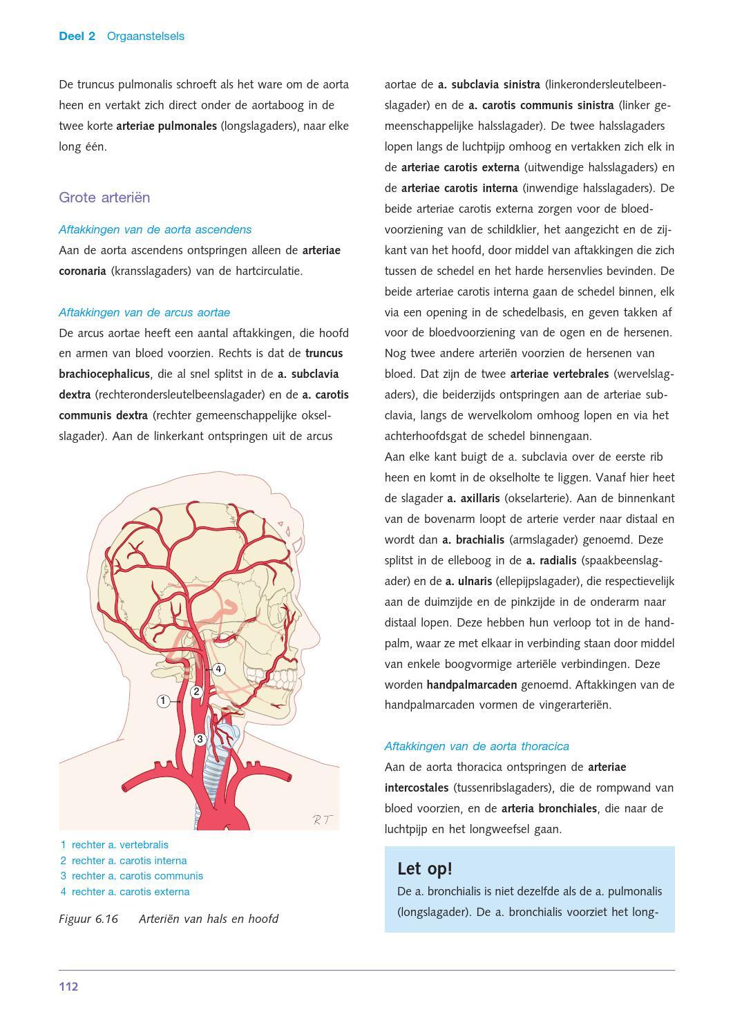 Anatomie en fysiologie van de mens by ThiemeMeulenhoff - issuu