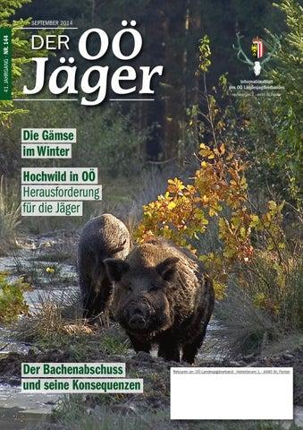 Zahlreiche Hunde Erleg Wolf Wolfsjagd Stahlstich Ideales Geschenk FüR Alle Gelegenheiten Einen Wolf Jagdgesellschaft