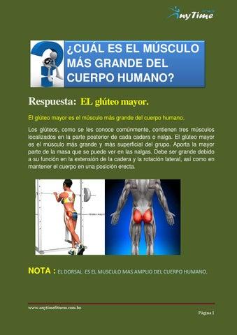 El músculo mas grande del cuerpo humano by ANYTIME-FITNESS - issuu